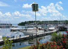 Green Turtle Bay Marina